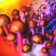 Psychedelic_Mushrooms_Color-732x549-Thumbnail